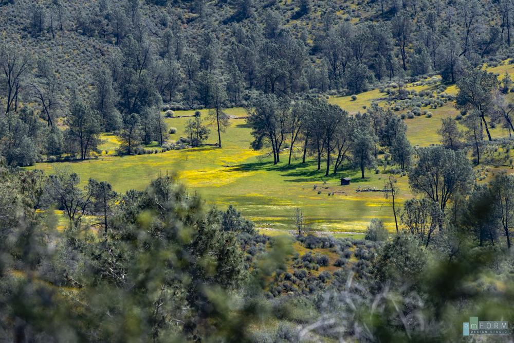 Red Hills Spring-3.jpg