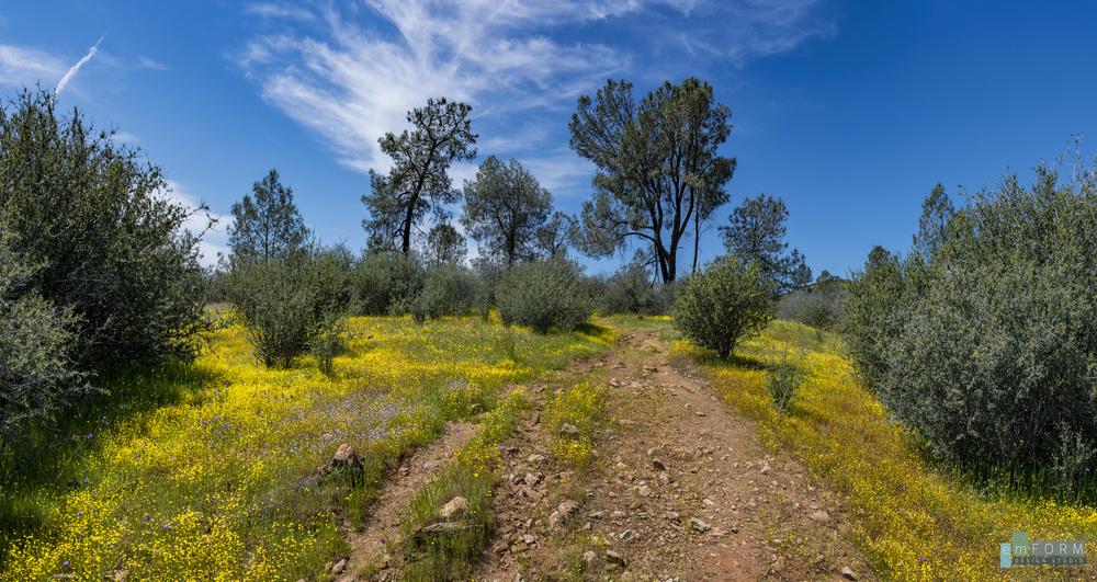 Red Hills Spring-7.jpg