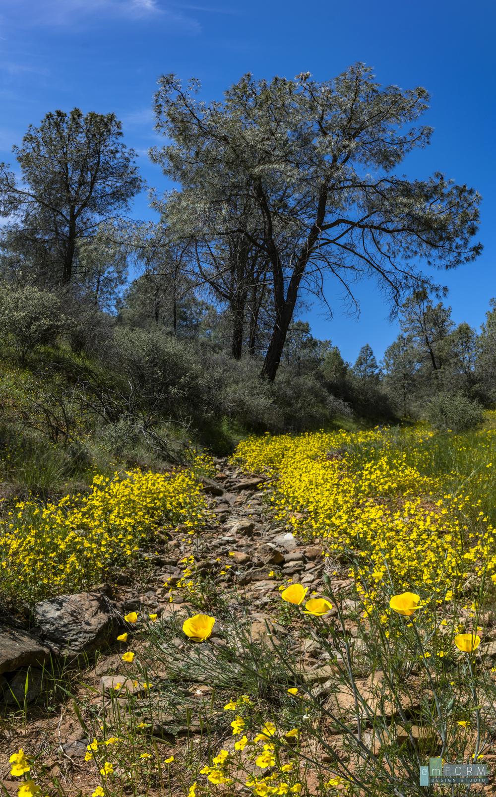Red Hills Spring-14.jpg