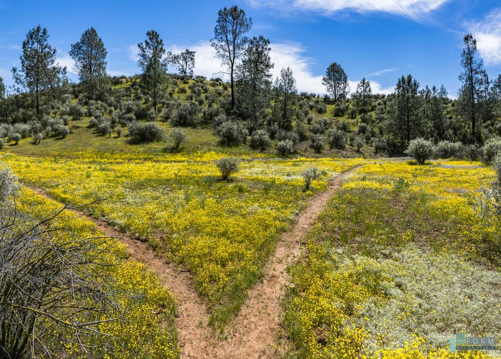 Red Hills Spring-27.jpg