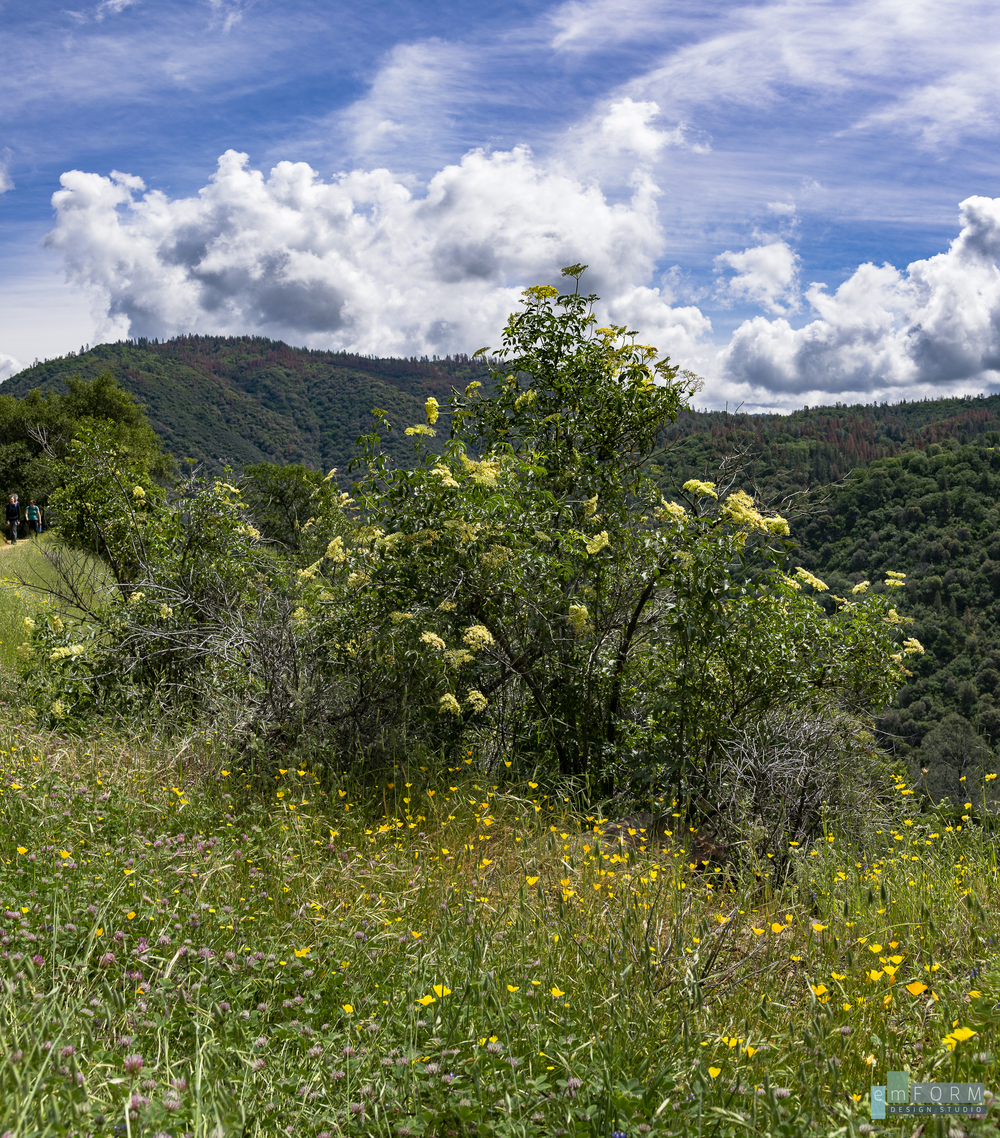 Westside Trail Spring-8.jpg