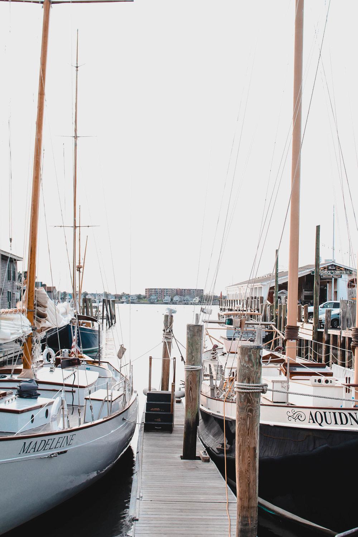 Newport-goats-8.jpg