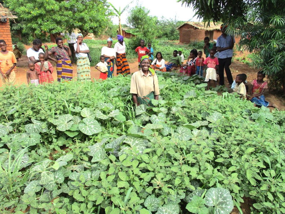 Because of the worst food crisis situation in 3 decades, Face-to-Face has launched the Victory Garden Campaign, to enable 100,000 at-risk Malawians stave off hunger by cultivating high-yielding, low-cost home Victory Gardens.