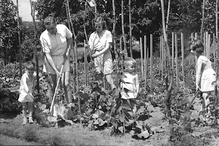 the history of victory and home gardens - The Victory Garden