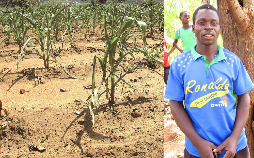 Above: Mr. Kalekeni Chiundo and his wilted maize harvest