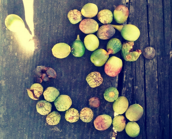 bay nuts 1.jpg