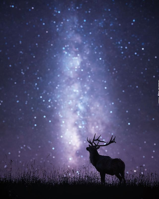 Rate this image in comments‼️ ⠀ ••••• Follow @jurrry for more 🔥  Deer *2016 ⠀ ⠀ ⠀ ⠀ ⠀ ⠀  #photography #photooftheday #photographer #night #longexposure #landscape #naturephotography #bokeh #astrophotography // #photoshare_everything #photolove #photomanipulation #nightscape #milkywaychasers #exploring_shotz #skyline #silhouettes #travelholic // #nightphotos #photoshopped #night_captures #night_shooterz #naturphoto #animalphoto #bokeh_shotz #galaxyphoto #longexpo_addiction