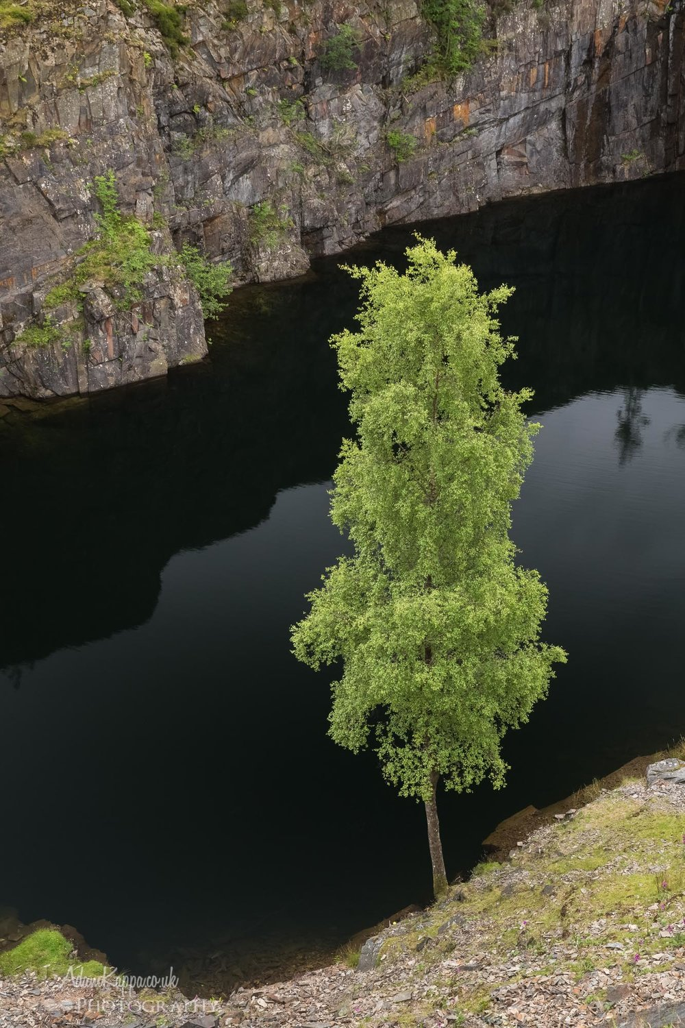 Tree in the quarry - I liked how this green tree stood out against the dark water