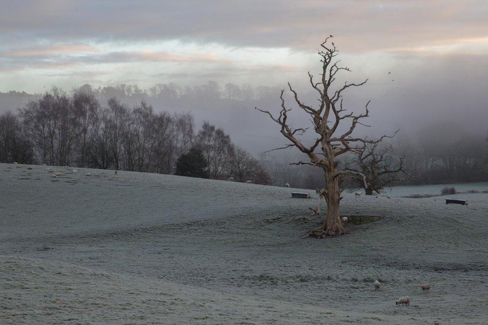 The old tree, Spark bridge. The Lake District