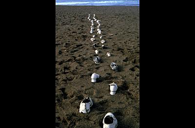 727e6c706 White Shoes Walking (Intervention) — RichardKamler.org