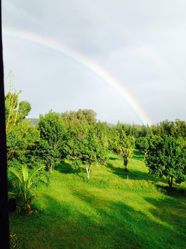Macadamia nut farm and ThetaHealing Classroom: the view of your daily Intuitive Anatomy Class.
