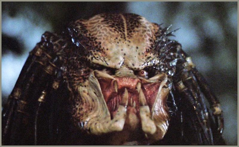 Predator_SS_01.jpg