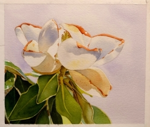 Magnolia, Watercolor, 11 x 14