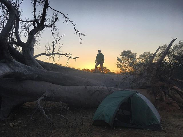 Gino at dawn standing on a fallen boabab tree in our southern Angola bush camp.  #angola #advrider #adventure #klr650 #klr #africa #travel #rei #camping #boabab #motorcycle #moto #motorcycletravel