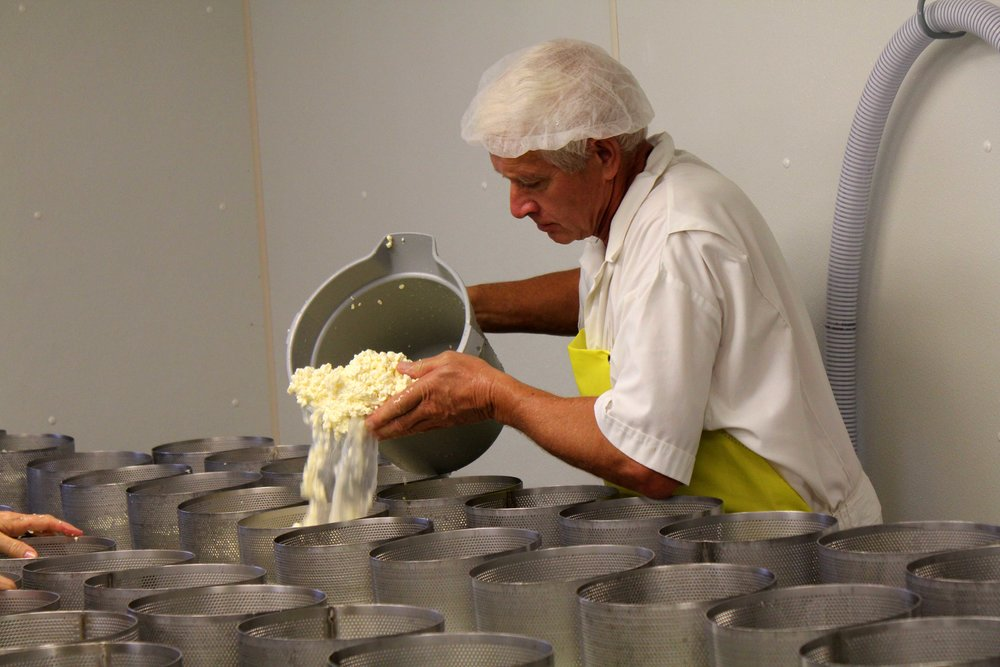 Ralph hurrying to pour cheese into wheel molds