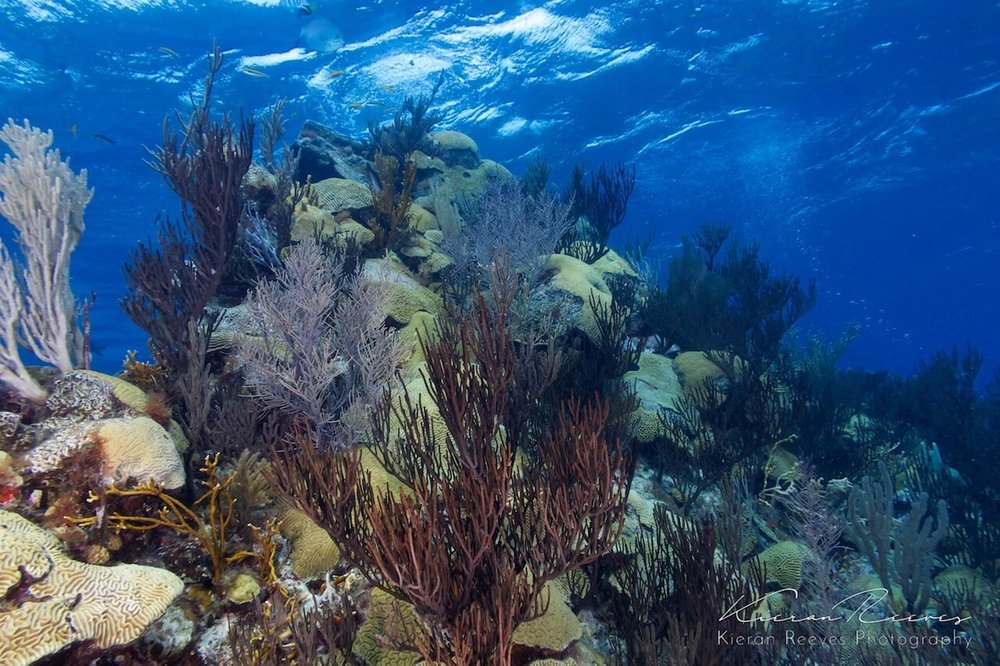 Bermuda's Reef