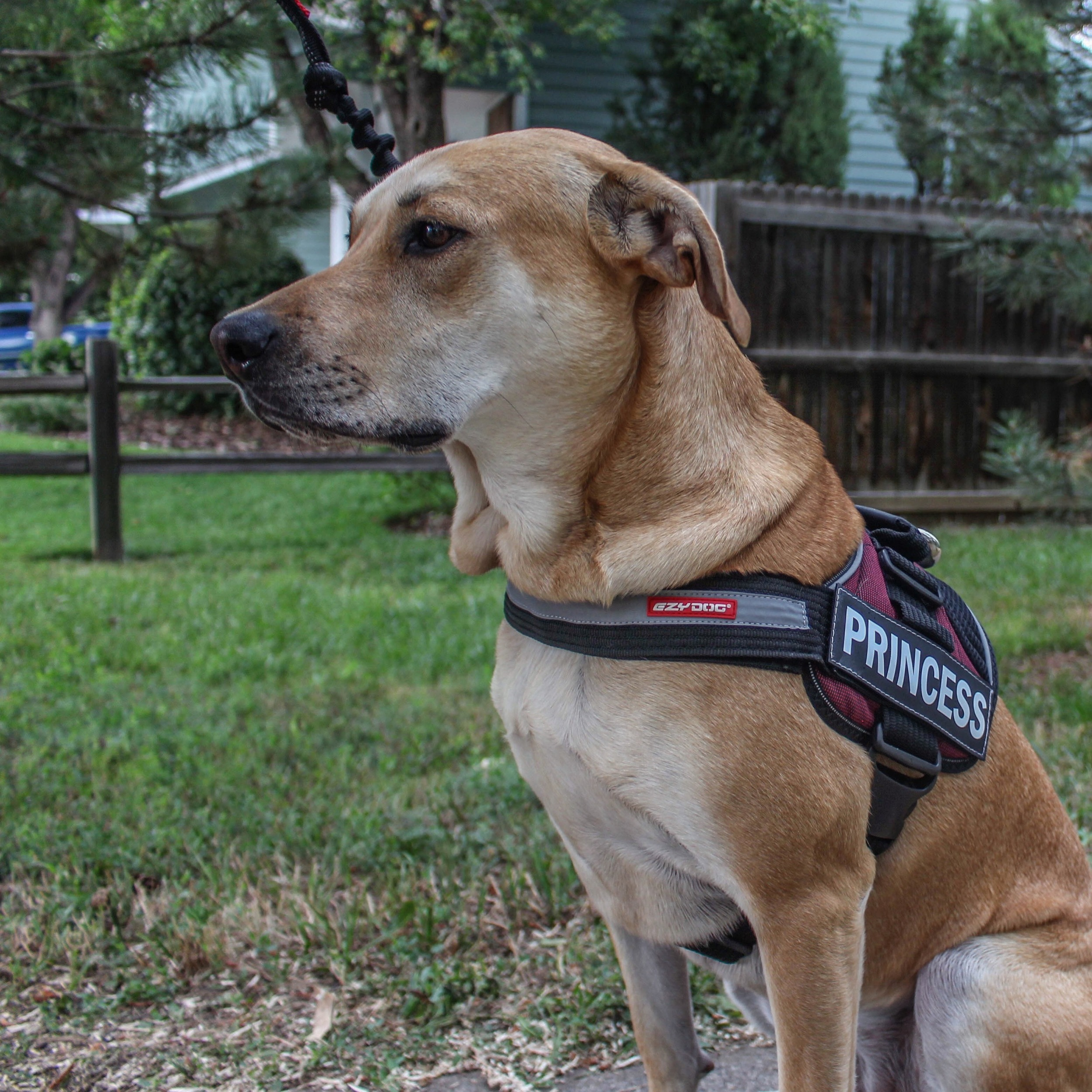 The EZYDOG Convert Harness Review — RMK Outdoors