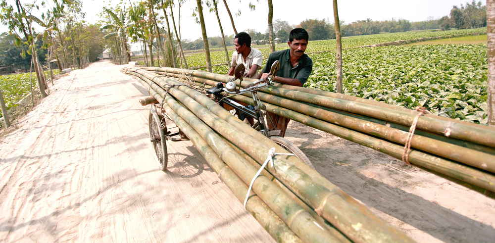 Bamboo is transported to the factory by rickshaw