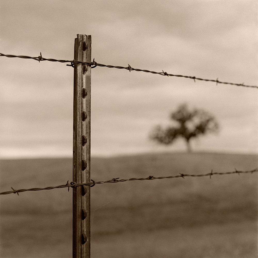 Fence and Tree, Folsom