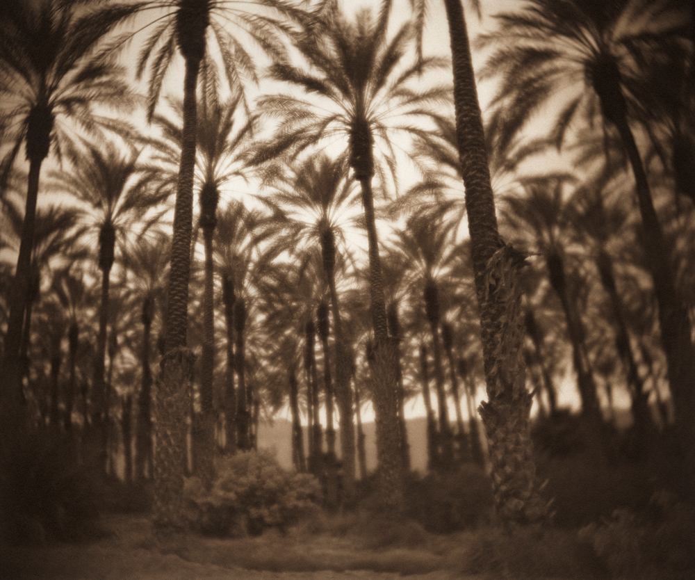 Palms near Salton Sea, CA
