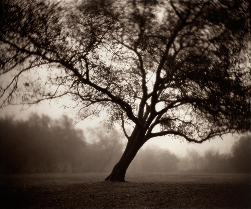 Tree, Goethe Park