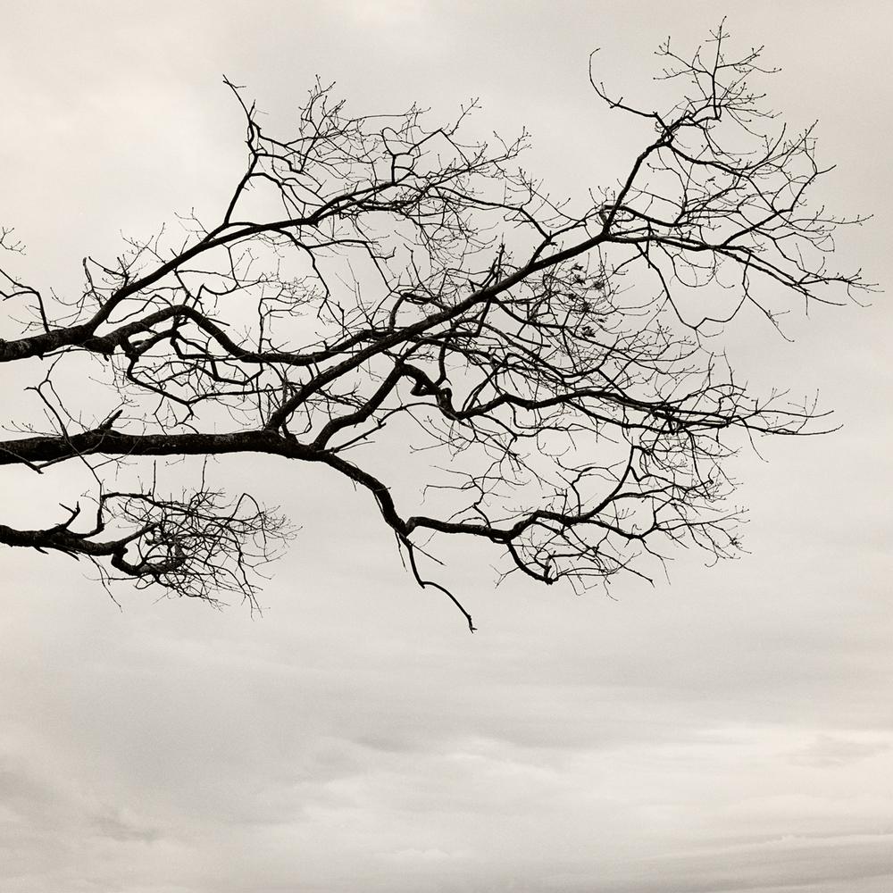 branch_sky.jpg