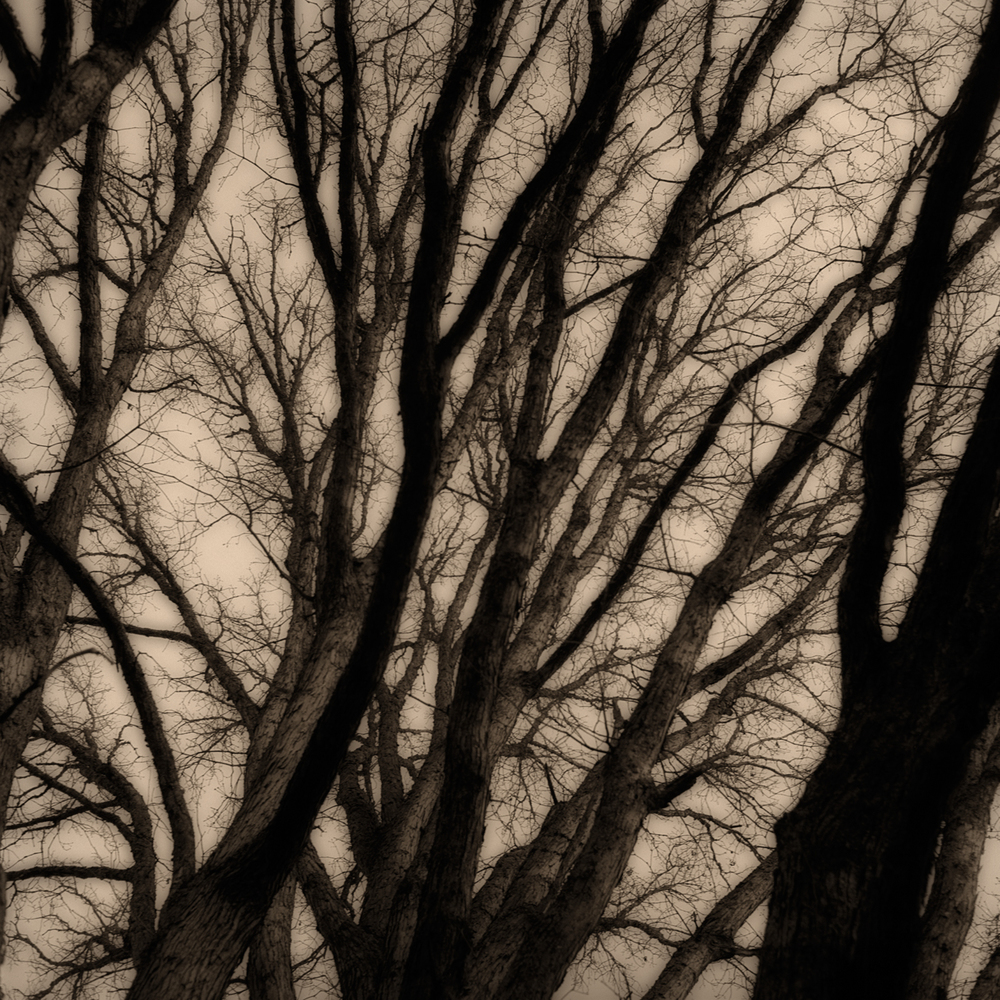 penland trees1.jpg