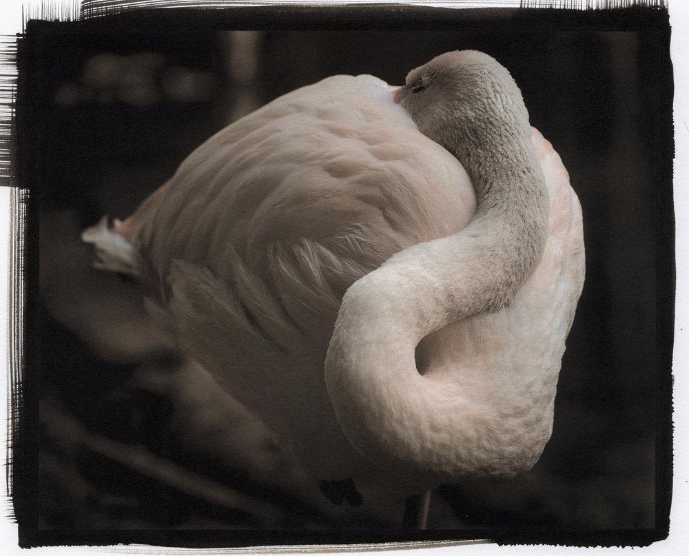 brazil bird3.jpg