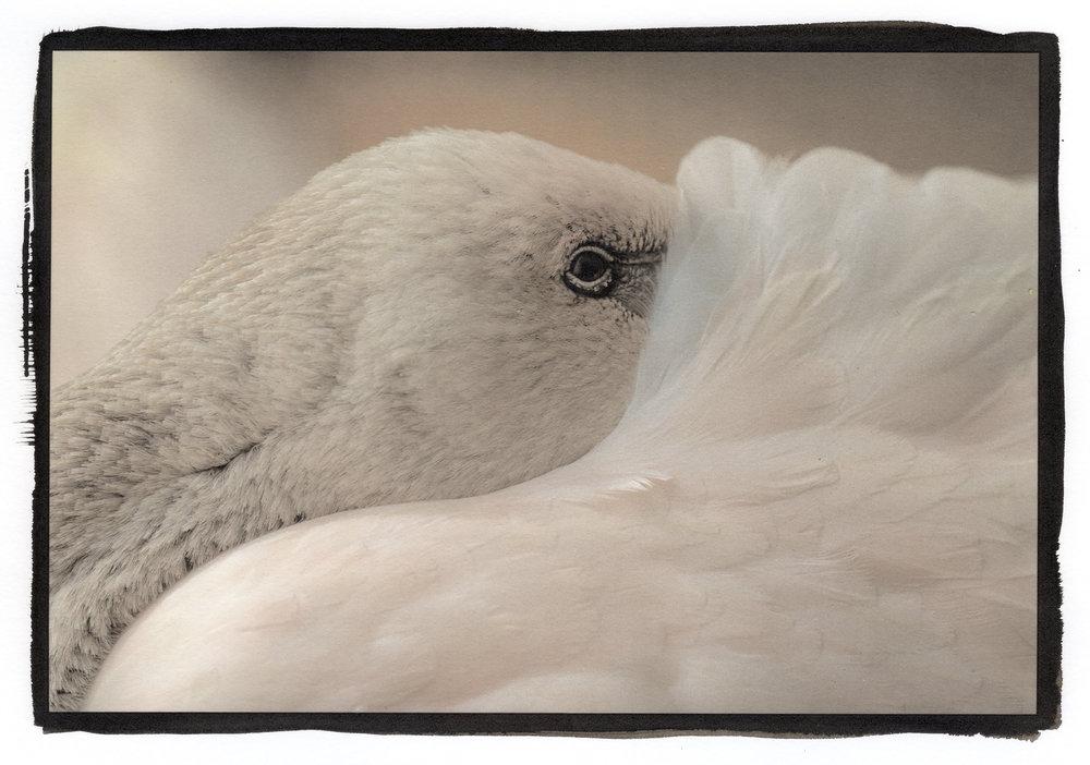 brazil bird 1 rev.jpg