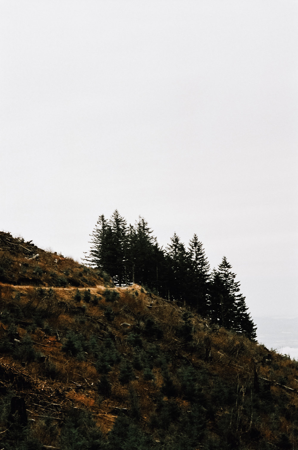 Livingston Mountain Camas Washington KyleWillisPhoto Agfa Vista 400 35mm Film Nikkormat FT2