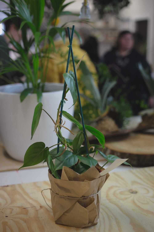 plant sale-7.jpg
