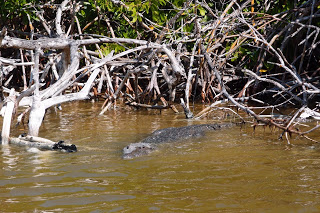 Crocodile - not alligator like the name says and the Spaniards falsely assumed .. it's not a river either.