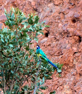 Arid land - but some very colorful brids there!