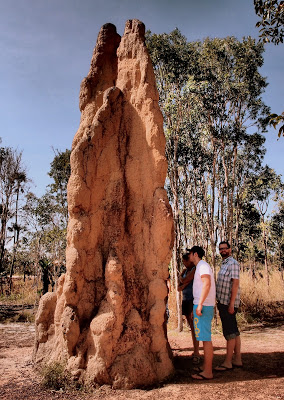 This Cathedral Termite Mound was over 5m tall!