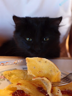 Breakfast in the canyon - kitty Michy wanted some banana pancakes too!