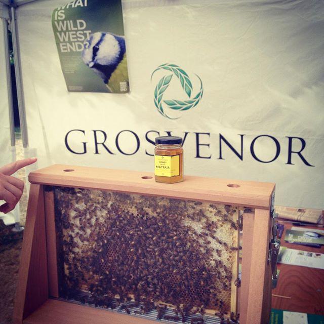Honey tasting and bees #summerinthesquare @grosvenor_GBI