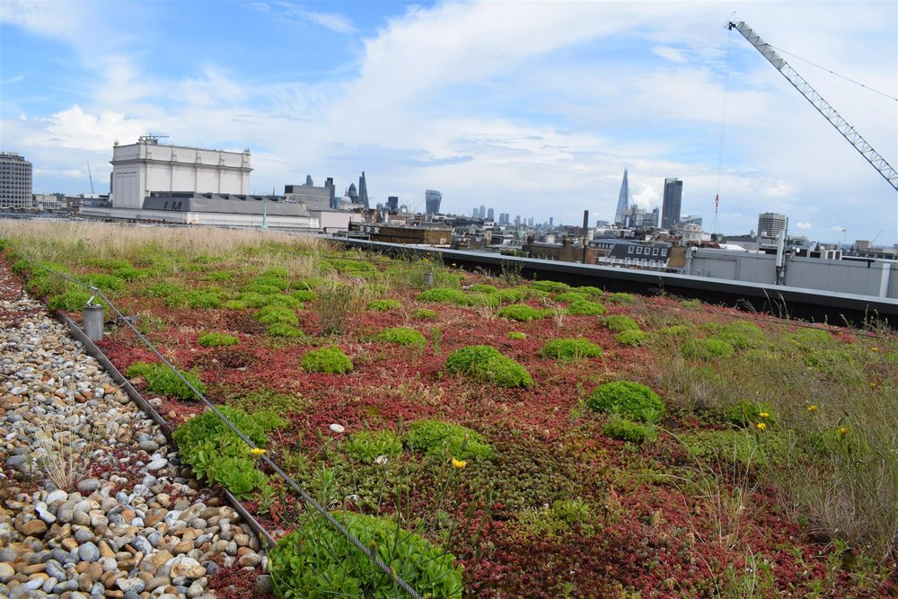 11 Slingsby Place - Extensive Green Roof.