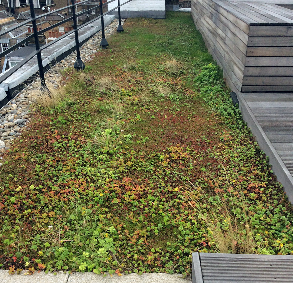 22 Ganton Street - Extensive Green Roof.