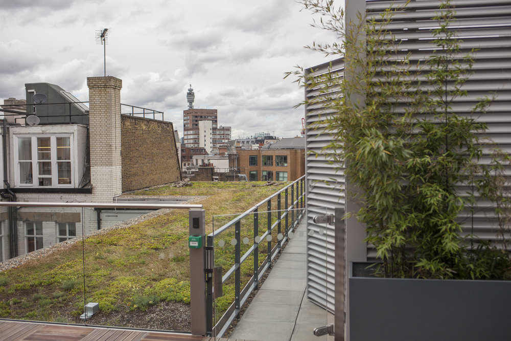 Crown Estate Rooftop Garden