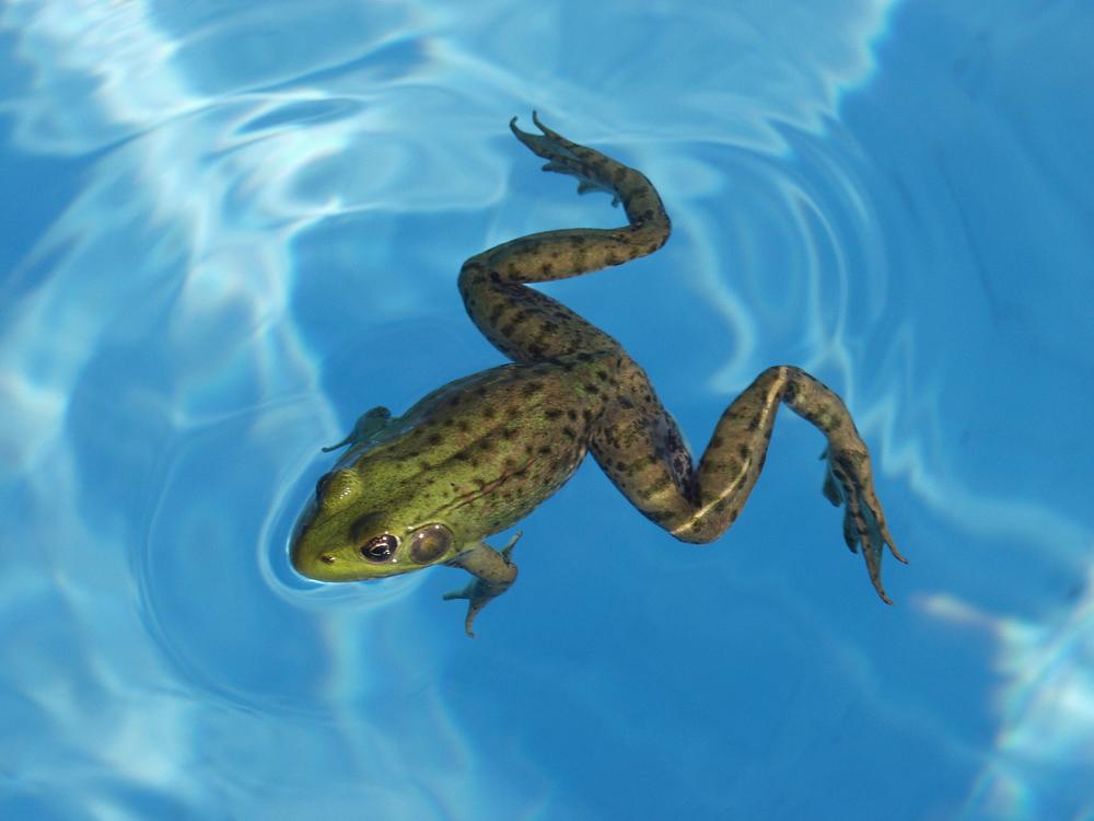 FrogzLegz Swimming Aids