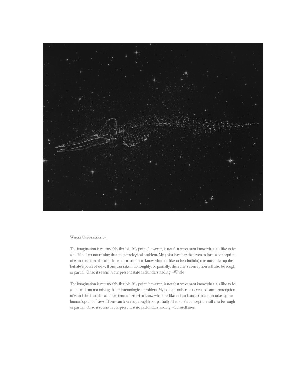 Physeter macrocephalus Constellation
