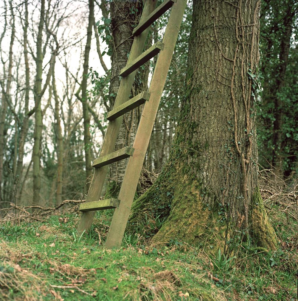 yew tree finals jpg-7-2.jpg