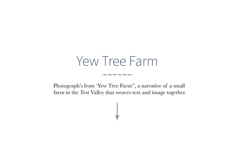 yew tree 1 s.jpg