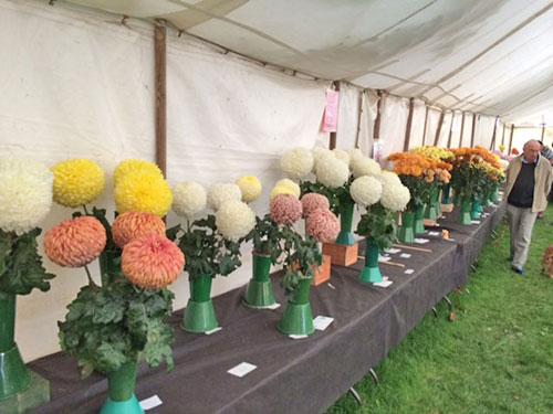 Horticultural-show-16.jpg