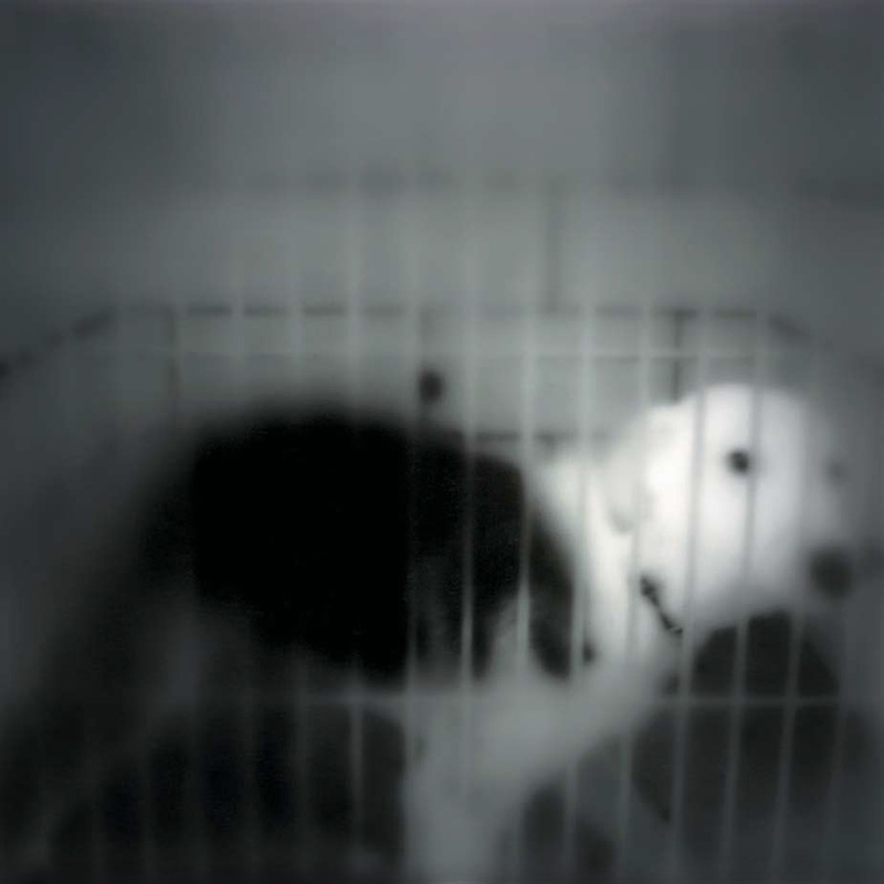 Untitled  Gelatin silver print 10 X 10 inches 1993