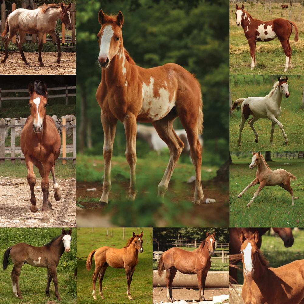 puledri_MateseRanch_foals