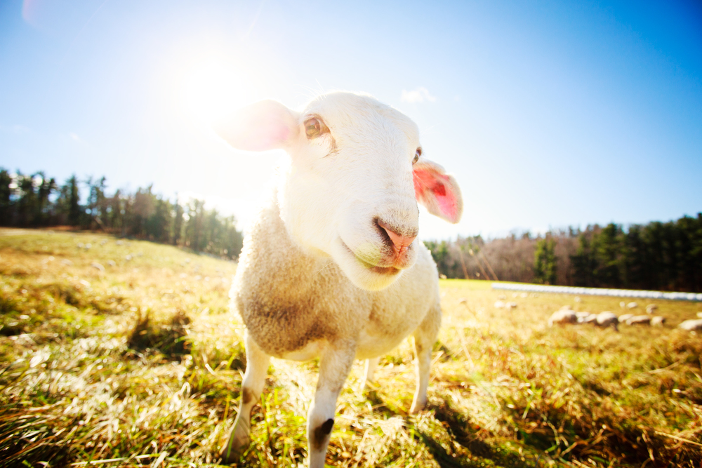 131118_Farm_Animals_0011_edit-copy.jpg