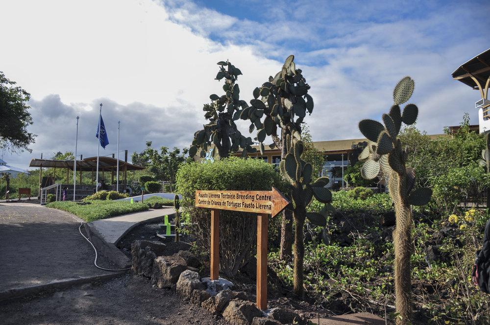 Santa Cruz Galapagos Day 1 Darwin Center edited.jpg