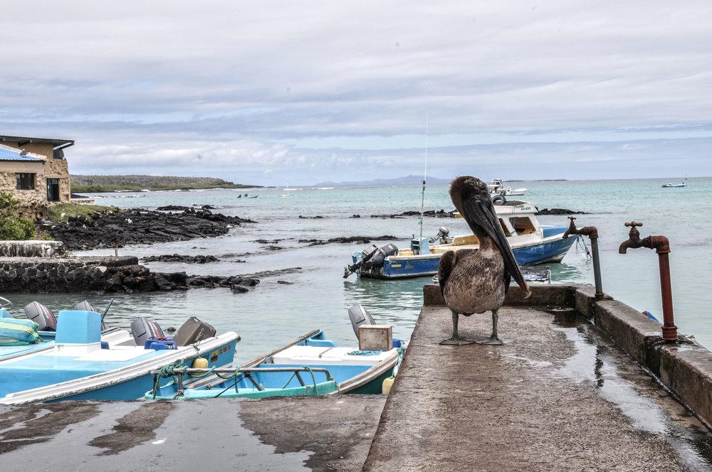 Galapagos day 1 edited.jpg