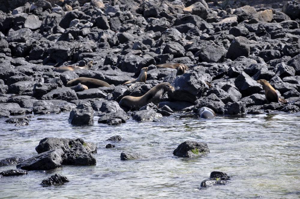 San Cristobal Galapagos day 2 edited 4.jpg